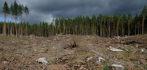 038653-deforestation-040320.jpg